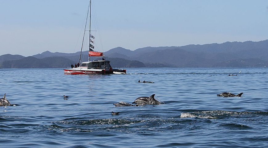 bottlenose dolphin watching tour in the bay of islands