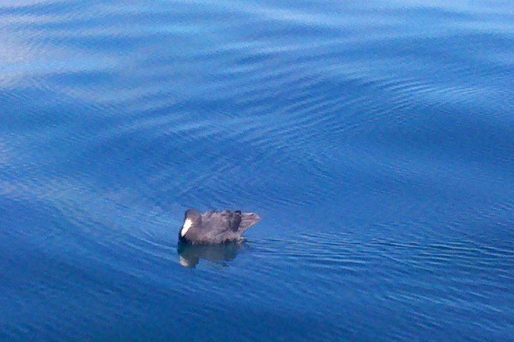 seabirds bay of islands