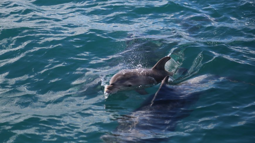bottlenose dolphin day cruise bay of islands
