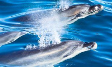 Wildlife Cruises Dolphin Facts